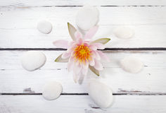 Waterlily and circle of pebbles on rustic background Stock Photography