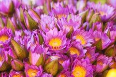 Waterlily closeup Stock Photos