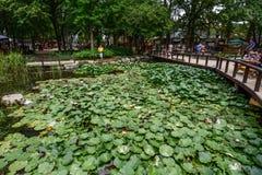Waterlily damm i Nami Island, Korea arkivfoto
