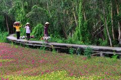 Waterlily fiorisce la stagione Fotografia Stock Libera da Diritti