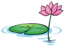 A waterlily flower Royalty Free Stock Photo