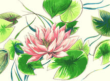Waterlily flower in the lake Stock Photography