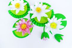 Waterlily flower made of paper. white background. Origami hobby. Gentle petal. Marsh with frogs tradition stock photos