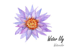 Waterlily .Hand drawn watercolor painting on white background.Vector illustration Stock Image