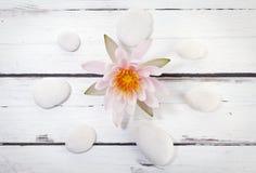 Waterlily i okrąg otoczaki na nieociosanym tle fotografia stock