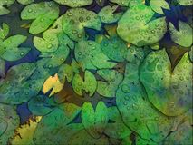 Waterlily leaves with the raindrop royalty free stock photography