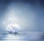Waterlily ljus - blått på vatten royaltyfri bild