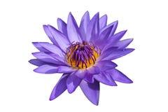 Waterlily lub lotosowy kwiat odizolowywający na białym tle Fotografia Stock