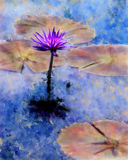 Waterlily Painting. A Lavender-pink waterlily blossom stands tall among the lily pads floating in the blue water in this colorful painted rendition Royalty Free Stock Photo