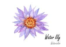 waterlily Pintura dibujada mano de la acuarela en el fondo blanco Ilustración del vector Imagen de archivo
