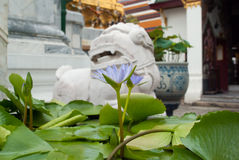 Waterlily, Thailand. Waterlily in a buddisth temple. Bangkok, Thailand Royalty Free Stock Photography