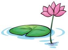 Waterlily una flor ilustración del vector