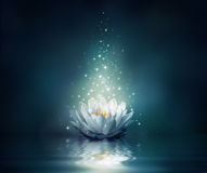 Waterlily on water Stock Photos