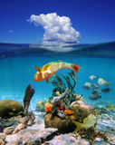 Waterline with cloud and marine life in the sea Royalty Free Stock Photo