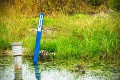 Waterlinen undertecknar i det frodiga damm. Arkivbild