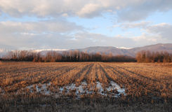 Waterloged Winter Field,Friuli Royalty Free Stock Images