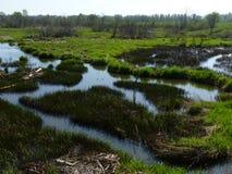 Waterlogged belt. At Tverskaya region, Russia royalty free stock images