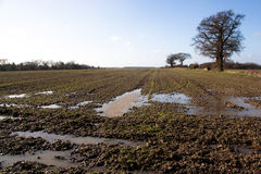 Waterlogged And Muddy Field royalty free stock images