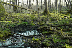 Waterlogged impassable terrain Stock Image