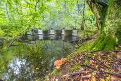 Waterloopbos的实验水利工程设施 免版税图库摄影