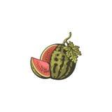 Watermeloen en plak Vector illustratie Royalty-vrije Stock Foto's