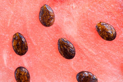 Watermeloen met vele zaden stock afbeeldingen