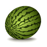 Watermeloen vectorillustratie Stock Afbeeldingen