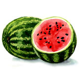 Watermeloen. waterverfillustratie Stock Fotografie