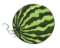 Watermeloenillustratie Stock Fotografie