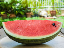 Watermeloenplak Stock Fotografie