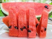 Watermeloenplak Royalty-vrije Stock Foto