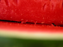 Watermelon stock images