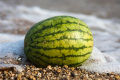 Watermelon. On the seashore on the beach Stock Photography