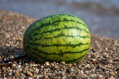 Watermelon. On the seashore on the beach Royalty Free Stock Image