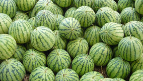 Watermelon. A pile of water melon in summer stock image