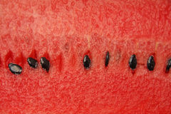 Watermelon. ( Close Up ) with seeds Royalty Free Stock Images