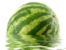 Watermelon. In water over white background Stock Image