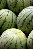 Watermelon. Harvested watermelon at fruit market Stock Images
