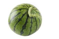 Watermelon. A round watermelon with white background stock photos