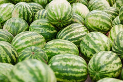 Watermelon abundance. Close-up of heal of fresh watermelons Royalty Free Stock Images
