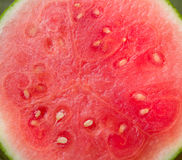 Watermelon background royalty free stock images