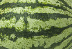Watermelon background. Green striped texture of the rind of watermelon Royalty Free Stock Images