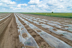 Watermelon beds covered with plastic foil ready for planting Stock Images