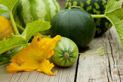 Watermelon, cantaloupe and zucchini with a flower Stock Photos