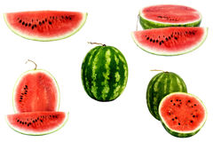 Watermelon Collection Stock Photography