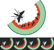Watermelon color 01. Vector.Watermelon in color 01 royalty free illustration