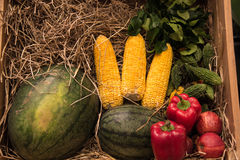 Watermelon, corn, red sweet pepper and apple Royalty Free Stock Photo