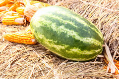 Watermelon and corn on straw Royalty Free Stock Images
