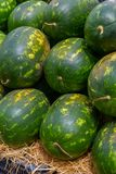 Stacked Watermelons royalty free stock photography