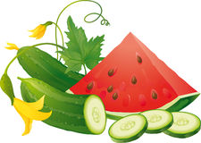 Watermelon and cucumber. Fresh cucumber slices and juicy watermelon Royalty Free Stock Photos